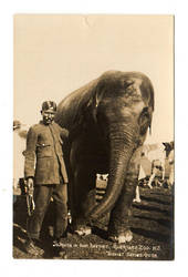 Real Photograph of Jamuna and her keeper Auckland Zoo. - 37994 - Postcard