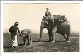 Superb Real Photograph of elephant and young. - 42127 - Postcard