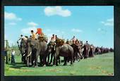 THAILAND Coloured Postcard of Parade of Elephants. Sent to New Zealand. - 42128 - Postcard