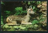 Modern Coloured Postcard by Gladys Goodall of young spotted fawn. - 444650 - Postcard