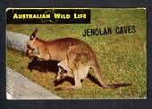 Coloured Lettercard of Jenolan Caves. - 444696 - Postcard