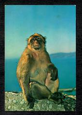 GIBRALTAR Modern Coloured Postcard of Rock Ape. - 444819 - Postcard