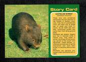 Modern Coloured Postcards of Wombat and Kangaroo. Two cards. - 444930 - Postcard