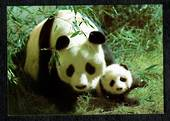 CHINA Modern Coloured Postcard of Giant Panda. - 444955 - Postcard
