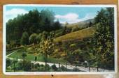 Coloured postcard of Botannical Gardens Wellington. 1906. - 47380 - Postcard