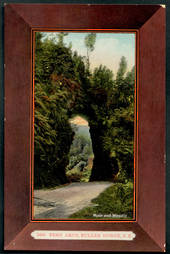 Coloured postcard by Muir and Moodie of Fern Arch Buller Gorge. - 48847 - Postcard