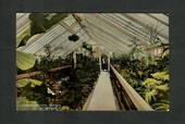 Coloured Postcard of Interior Winter Garden Dunedin. - 49262 - Postcard