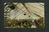 Coloured Postcard of Interior Winter Garden Dunedin. - 49288 - Postcard