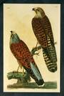 Modern Coloured Postcards from the British Library of Birds. Mainly old coloured illustrations from albums and books in the libr