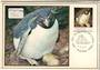ARGENTINA 1983 Maxim Cards. Penguins Birds Antarctic. Set of 10. - 20810 - PostalHist