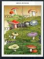 MALI Fungi miniature sheet. - 20982 - UHM