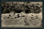 Real Photograph by S C Smith of Devils Reception Whakarewarewa. - 246169 - Postcard
