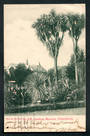 NEW ZEALAND Early Undivided Postcard by Muir & Moodie of The Gardens and Museum Christchurch. - 248528 - Postcard