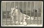 Real Photograph by N S Seaward of Lioness at Dunedin Zoo. - 249161 - Postcard
