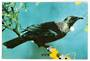 Modern Coloured Postcard by PPLtd of Tui. - 443516 - Postcard