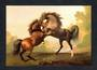 Modern Coloured Postcard of fighting stallions. - 444793 - Postcard