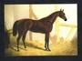 Modern Coloured Postcard of the bay colt Cotherstone. - 444794 - Postcard