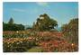 Modern Coloured Postcard by G B Scott of Parnell Rose Gardens. - 445220 - Postcard