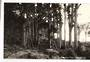 Real Photograph by G E Woolley of Trounson Kauri Park. - 44773 -