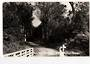 Real Photograph by T G Palmer & Son of Waipoua Forest. - 44780 - Postcard