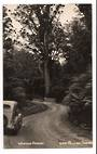 Real Photograph by T G Palmer & Son of Waipoua Forest. - 44782 - Postcard