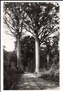 Real Photograph by G E Woolley of Matapouri. - 44784 -
