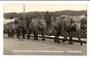 Real Photograph by T G Palmer & Son of Circus Elephants on Victoria Bridge Whangarei. - 44787 - Postcard