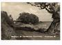 Real Photograph by T G Palmer & Son of the Approach to the Motor Camp Tamatarau. - 44837 - Postcard