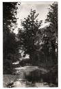 Real Photograph by  G E Woolley of Waipoua Kauri Forest. - 44874 -
