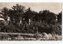 Real Photograph by T G Palmer & Son of Tronson Kauri Park. - 44883 - Postcard