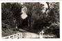 Real Photograph by T G Palmer & Son of Waipoua Forest. - 44986 -
