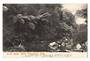 Early Undivided Postcard of River below Whangarei Falls. - 45007 - Postcard