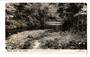 Real Photograph by Dawson of Waipoua Stream. - 45029 - Postcard