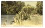 Tinted Postcard by N S Seaward of Mahurangi River Warkworth. - 45064 - Postcard
