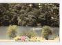 Tinted Postcard by N S Seaward of Mahurangi River Warkworth. - 45065 - Postcard