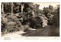 Real Photograph by Dawson of the Scenic Drive Auckland. - 45543 - Postcard