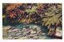 Coloured postcard of trout at Rainbow Springs Rotorua. Advertising card. - 45997 - Postcard