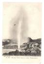 Early Undivided Postcard by Muir and Moodie of the great Wairoa Geyser in action. - 46060 - Postcard