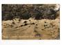 Real Photograph by Smith of the Devils Reception Whakarewarewa. - 46182 - Postcard