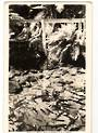 Real Photograph by A B Hurst & Son of Trout in Fairy Springs Rotorua. - 46190 - Postcard