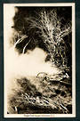 Real Photograph by A B Hurst & Son of Eagles Nest Geyser Wairakei. - 46731 - Postcard