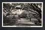 Real Photograph by A B Hurst & Son of Brooklands Park New Plymouth. - 47065 - Postcard