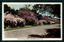 Coloured postcard by Hurst of Flowering Cherry Blossom Palmerston North. - 47203 - Postcard