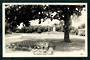 Real Photograph by A B Hurst & Son of The Gardens Levin. - 47313 - Postcard