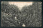 Postcard of View in Makuri Gorge near Pahiatua. - 47866 - Postcard