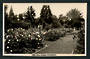 Real Photograph by A B Hurst & Son of Rose Gardens masterton. - 47895 - Postcard
