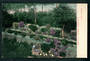Coloured Postcard by Muir & Moodie of Gardens Napier. - 48086 - Postcard
