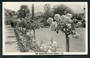 Real Photograph by A B Hurst & Son of Rose Gardens Clive Square Napier. - 48090 - Postcard