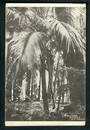 Postcard of Nikau Grove Morere Hot Springs. - 48155 - Postcard