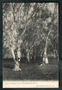 Postcard of trees in Hagley Park. - 48365 - Postcard